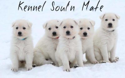 Our J litter