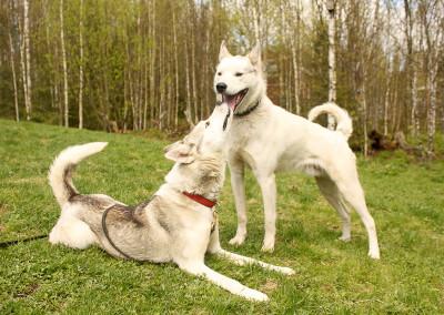 puppies01