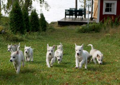 music puppies